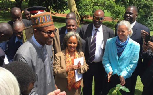Nigerian President Buhari recognizes UNEP's efforts on Ogoniland clean-up